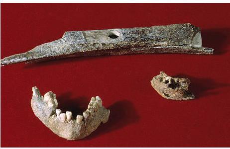 Oberschenkelknochen (hinten) und Unterkiefer (vorne rechts) aus Willendorf, Unterkiefer aus Mießlingtal (vorne links); Foto: W. Reichmann, NHM Wien
