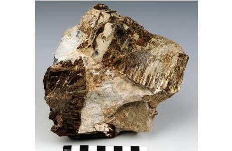 Astrophyllit als goldbraune Kristalle bis 13 cm Länge in heller Nephelinsyenitpegmatit-Matrix (Sagasen Quarry, Norwegen);; Foto: A. Schumacher, NHM Wien