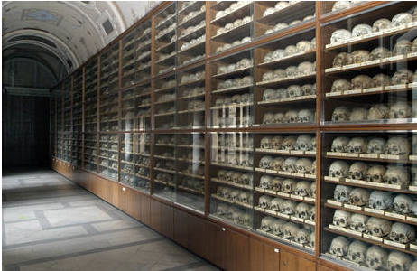 Der sogenannte Schädelgang am Naturhistorischen Museum Wien; Foto: W. Reichmann, NHM Wien