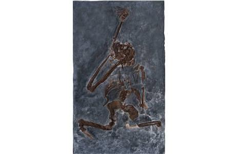 Abguss des in situ Befundes von Oreopithecus bambolii aus Italien (IGF 11778); Foto: W. Reichmann, NHM