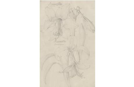 Bleistiftzeichnung, Künstler: Brüder Bauer (Josef, Franz und Ferdinand Lucas Bauer)
