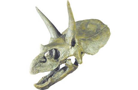 Dreihornsaurier (2000z0185-0000)