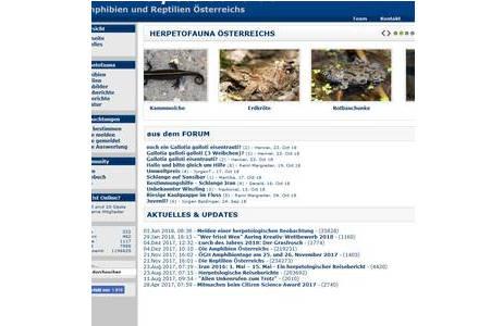 Funde schnell und einfach auf herpetofauna.at melden - Screenshot; Foto: herpetofauna.at