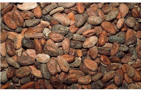 Kakaobohnen; Foto: Johannes Walter