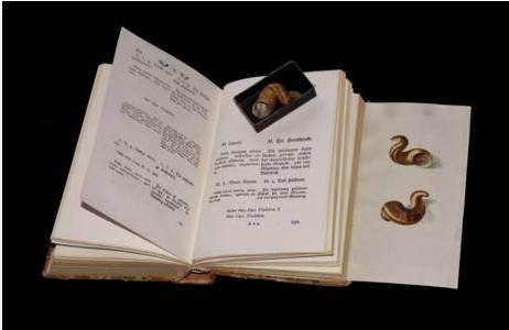 """Handcolorierte Farbtafel aus der """"Taschenbuchausgabe"""" von Born (1778) mit Originalobjekt,; Foto: S. Schnedl, NHM Wien"""