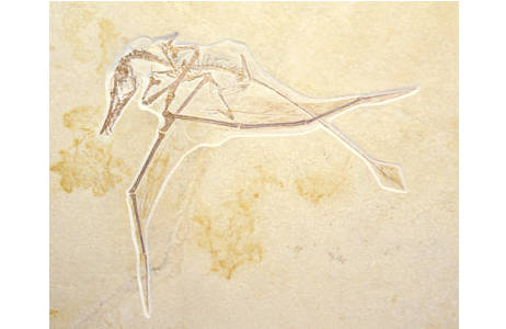 Flugsaurier (1998z0077-0100)
