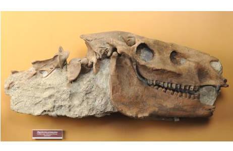 Schädel eines Dreizehen-Pferdes (1875-0006-0001)