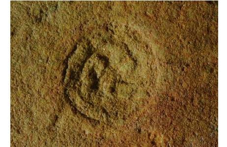 Ein Fossil namens Drei-Ärmchen (2000z-0181-0001)