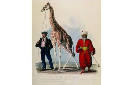 Bild von 1. Giraffe in Wien mit den k.k. Menagerie-Tierwärter Josef Aman und den Wärter Ali Sciobari., Lithograf: Eduard Gurk