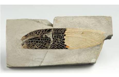Fossile Gliedertiere