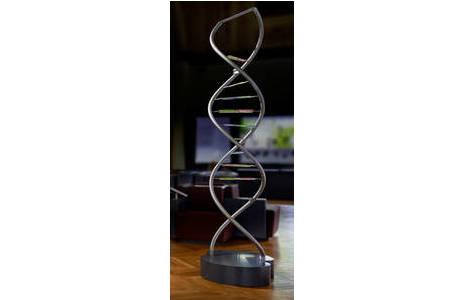 Stilisierte DNA-Doppelhelix, Objekt in der anthropologischen Dauerausstellung; Foto: W. Reichmann, NHM Wien