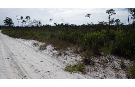 Florida scrub - Reste des alten Lebensraums, der sich einst von Florida bis in die Wüste im Südwesten erstreckte; Foto: H. Shaverdo